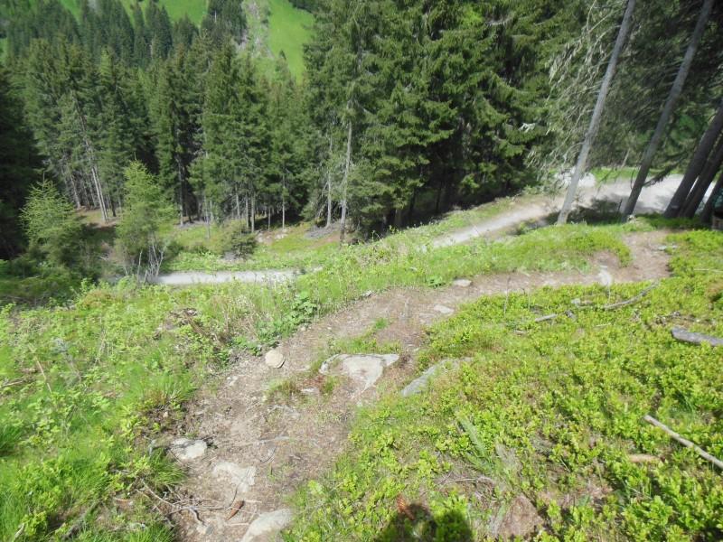 Bild vom Waldweg zwischen Oberberg und Auffangalm bzw. Brandstattalm