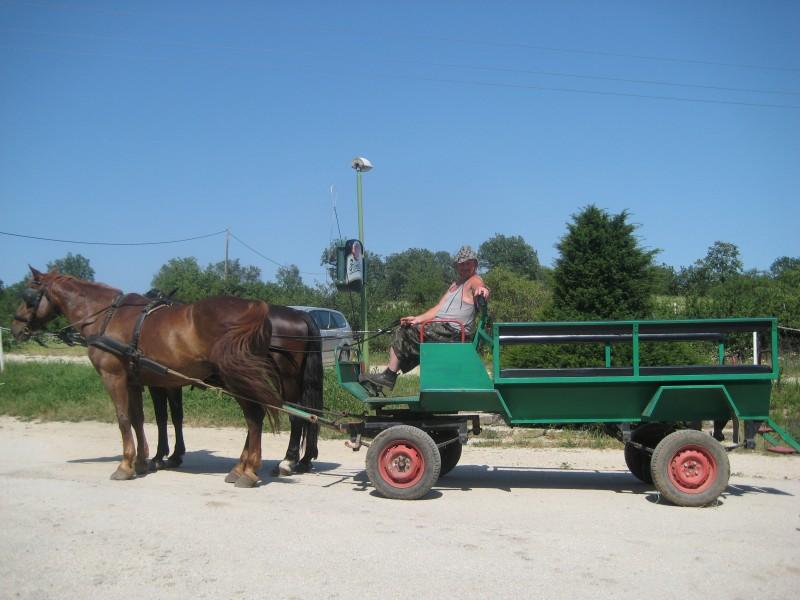 Unsere Kutsche auf dem Csikos Reiterhof