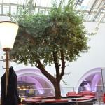 Baum in der 1. Klasse DB Bahn Lounge in Frankfurt