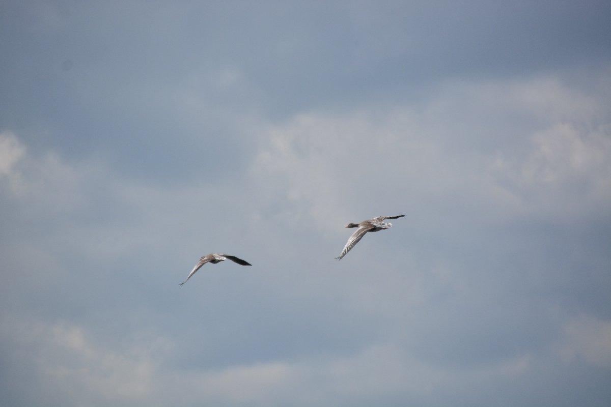 Unsere tierischen Begleiter aus der Luft auf der Schifffahrt auf der Havel