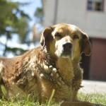 Der wachsame Hund :)