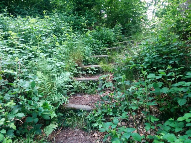 Westerwaldsteig Etappe 10:  Stufen runter zur Nister