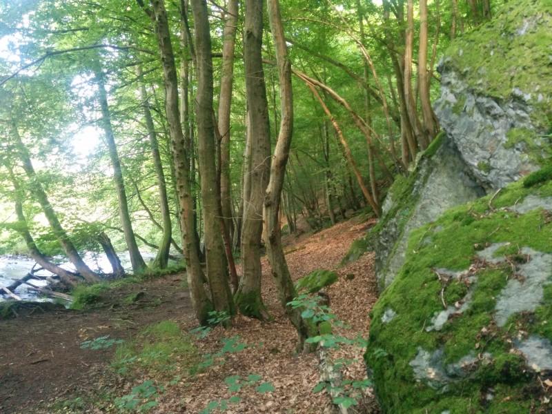 Westerwaldsteig Etappe 10: Waldweg