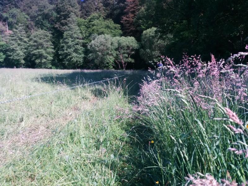 Westerwaldsteig Etappe 10: Wiesenweg am Weiderand neben der Kleinen Nister