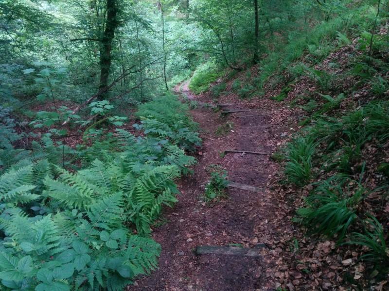Steil geht es runter in die Holzbachschlucht auf der Etappe 9 des Westerwaldsteigs