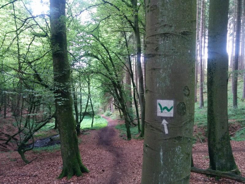Westerwaldsteig Etappe 7: Der leicht matischge Weg in der Holzbachschlucht