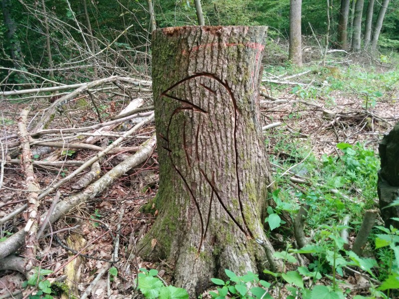 Westerwaldsteig Etappe 9: Schnitzerei in Baumstumpf am Wegrand