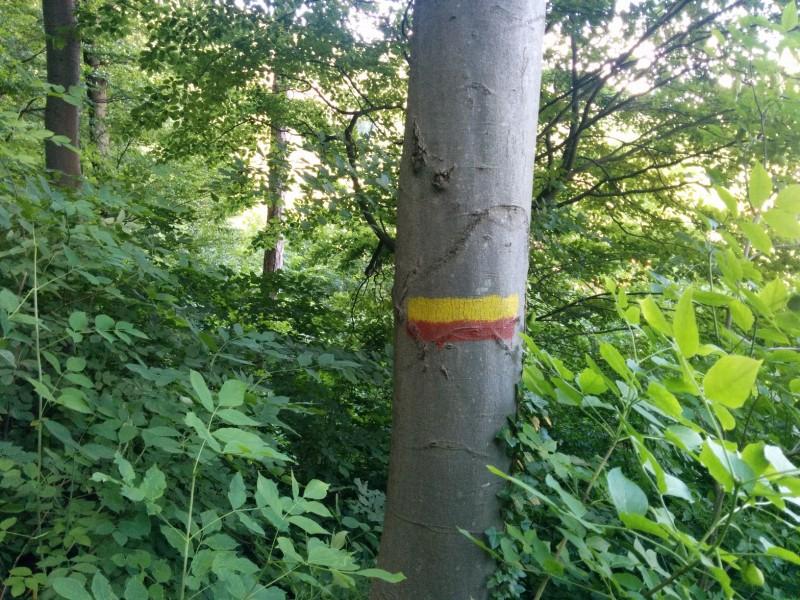 Wegkennzeichnung am Baum