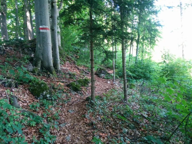 Pilgern_Via_Sacra_Tag_2_Araburg-Lilienfeld_30