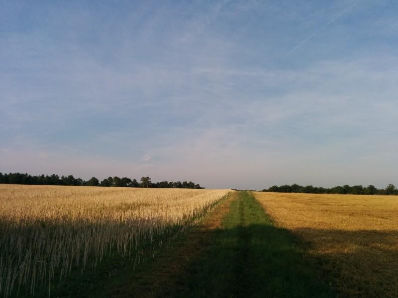 Raus aus dem Wald, ab auf's Feld auf dem Jakobsweg kurz vor Beckstein