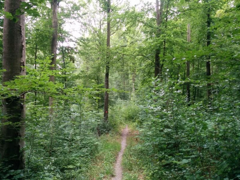 Waldweg auf dem Panoramaweg Taubertal / Jakobsweg