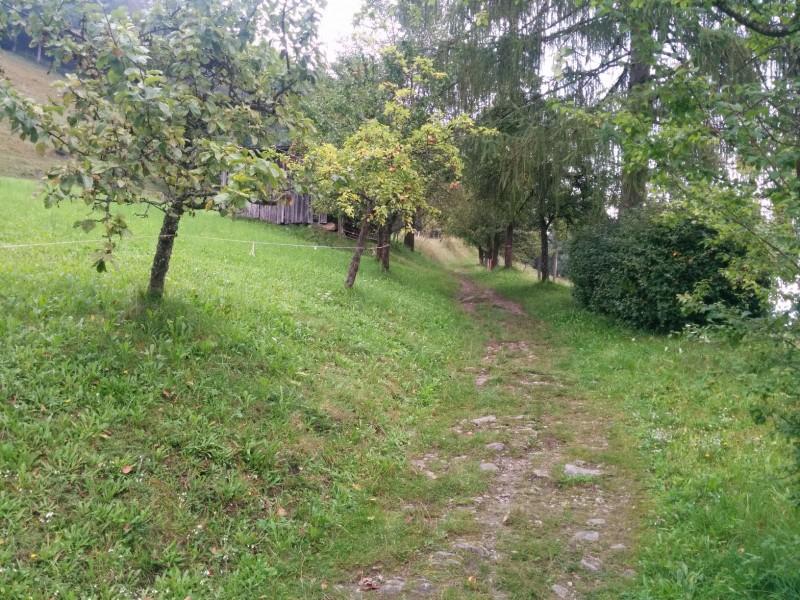 Endlich weg vom Asphalt auf dem Maiskogelweg