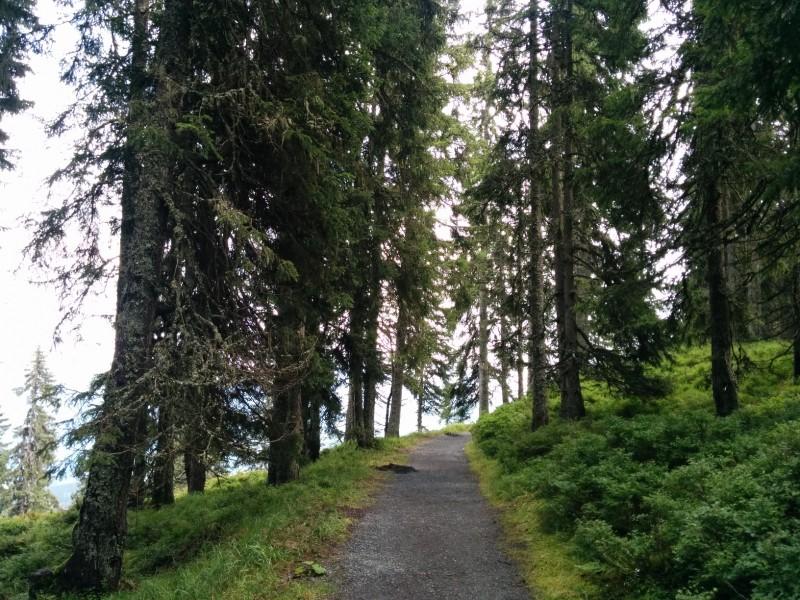 Kurzer schöner Weg zwischen Schmittenhöhe und Areitalm
