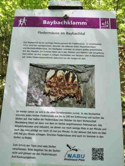 Infotafel am Rande des Weges, hier zu Fledermäusen auf der Traumschleife Baybaytal