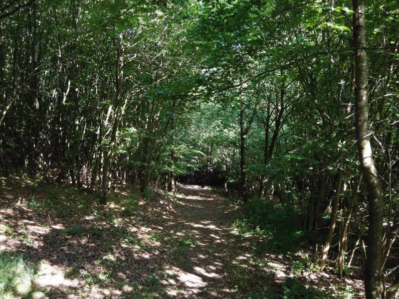Waldweg auf der Verlängerung des Saar-Hunsrück-Steigs