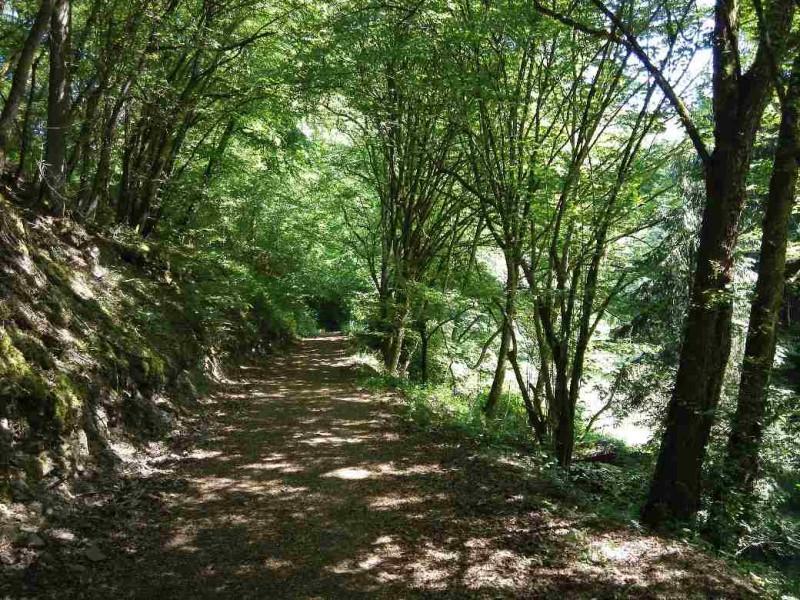 Immer breitere Wege im Baybachtal, Teil des Saar-Hunsrück-Steigs