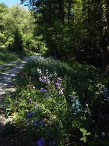 Saar-Hunsrueck-Steig-Etappe_22-Schmausemuehle-Morshauen_16