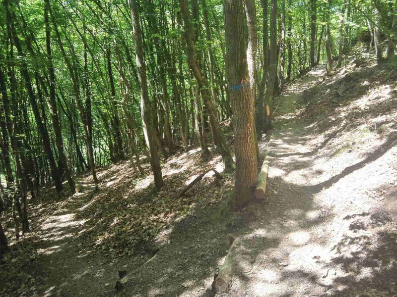 Auf Serpentinen geht es nach oben, immer der Traumschleife Murscher Eselsche nach auf dem Saar-Hunsrück-Steig