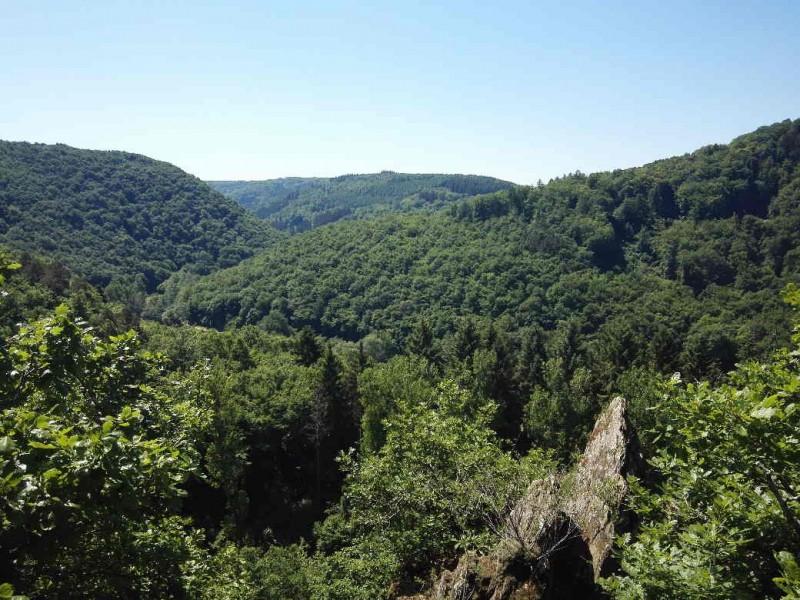 Da siehst du, warum das die für mich schönste Etappe des Saar-Hunsrück-Steigs werden sollte auf der Traumschleife  Murscher Eselsche