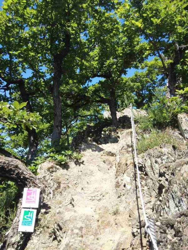 Steil geht es die Traumschleife Murscher Eselsche hinauf auf dem Saar-Hunsrücksteig