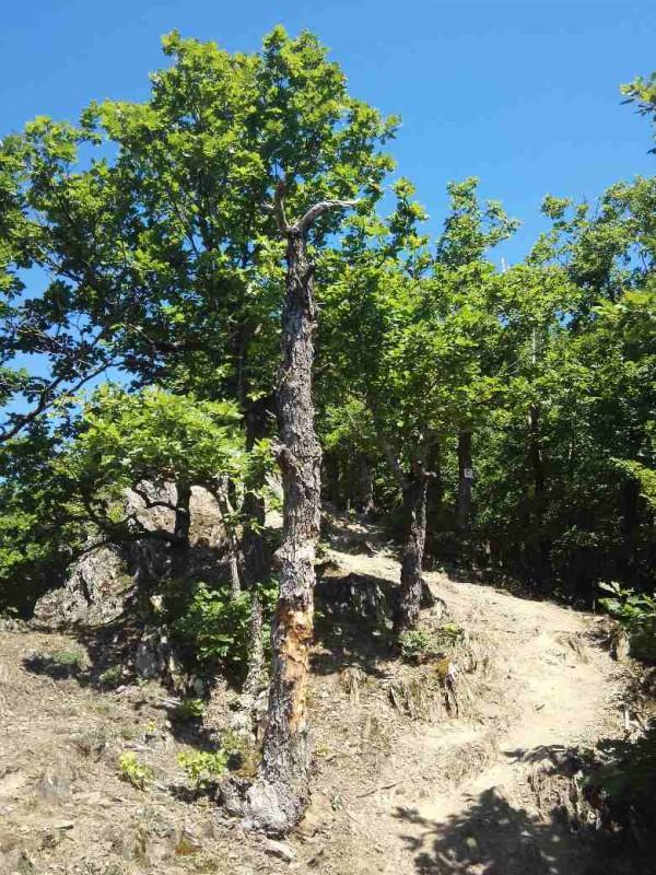 Saar-Hunsrueck-Steig-Etappe_22-Schmausemuehle-Morshauen_25