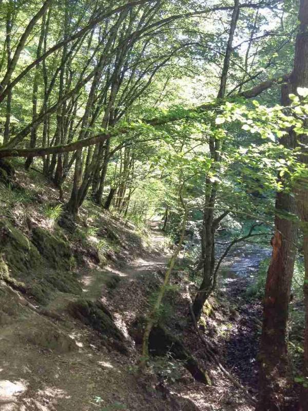 """Toller Weg im Baybachtal, bislang """"nur"""" Traumschleife, jetzt teil des Saar-Hunsrück-Steigs"""