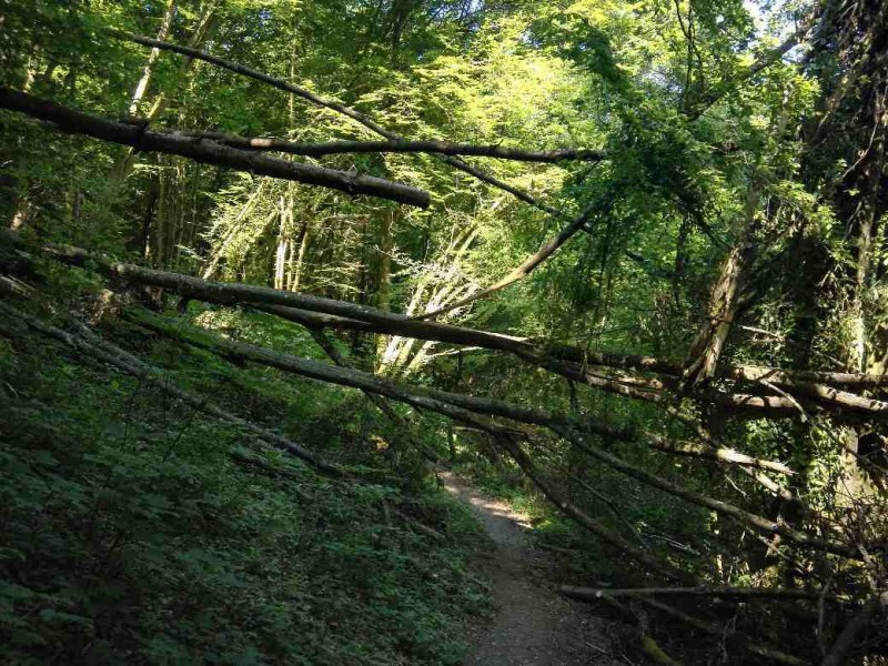 Bäume quer über dem Weg, aber ich komme gut durch im Baybachtal
