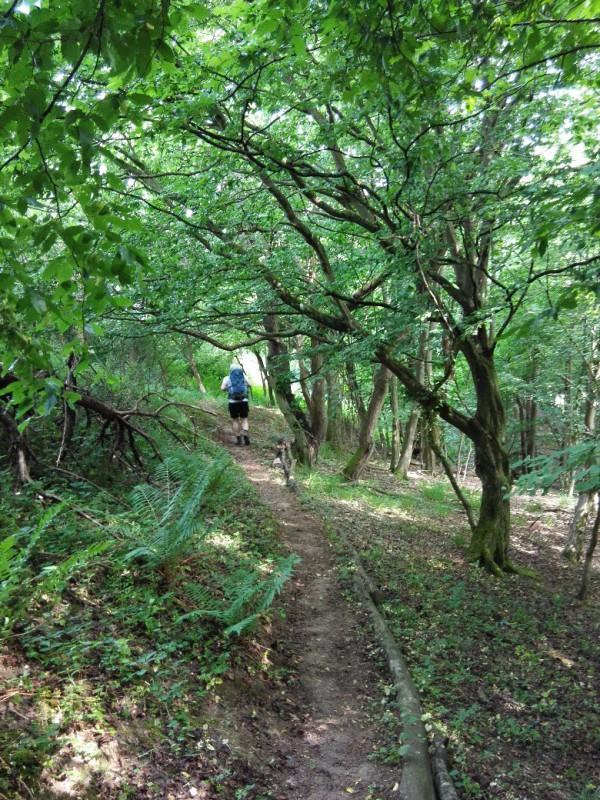 Mit einem kleinen Wegchen durch ein Wäldchen kann man schön verniedlichend schreiben - auf dem Saar-Hunsrück-Steig kurz nach Morshausen