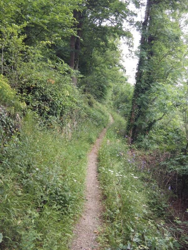 Waldweg direkt nach der Ehrenburg auf der Etappe 23 des Saar-Hunsrück-Steigs