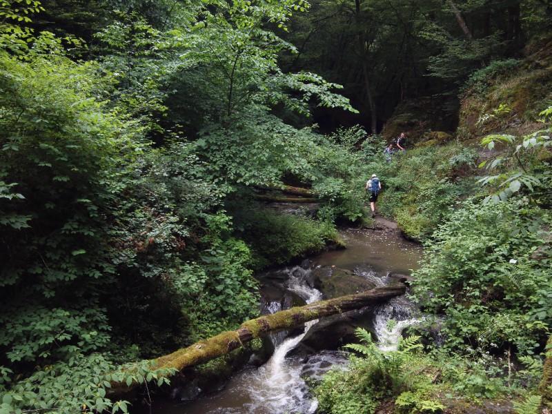 Überquerung des Ehrbaches in der Traumschleife Ehrbachklamm auf dem Saar-Hunsrück-Steig