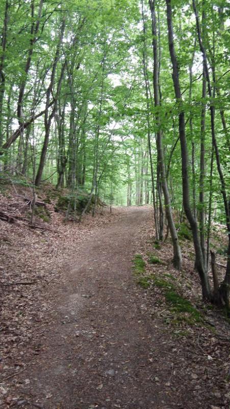 Und wieder ein breiterer gemütlicher Weg in Halbhöhenlage auf dem Saar-Hunsrück-Steig