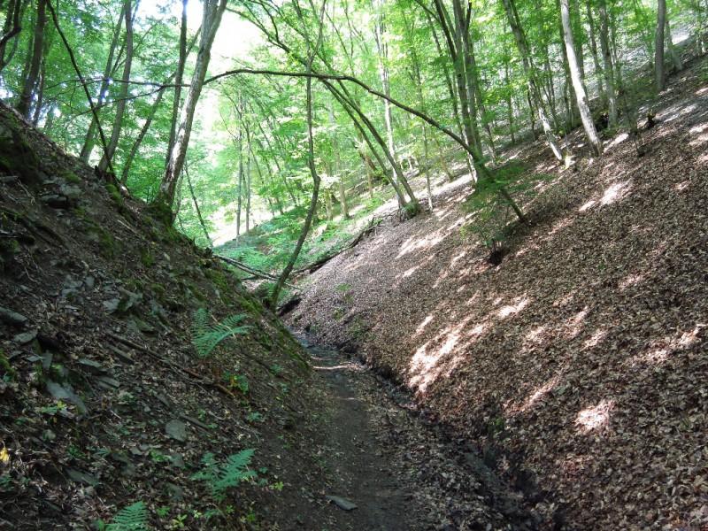 Und wieder heißt es bergauf auf dem Saar-Hunsrück-Steig