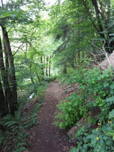 Waldweg am Saar-Hunsrück-Steig auf der Etappe 23 von Morshausen nach Oppenhausen