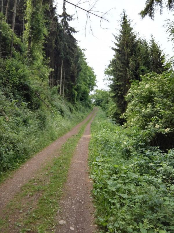 Weg zur Ehrenburg auf dem Saar-Hunsrück-Steig