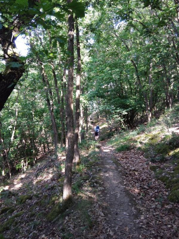 Waldweg zu Beginn der Etappe 24 des Saar-Hunsrück.Steigs, kurz nach Oppenhausen