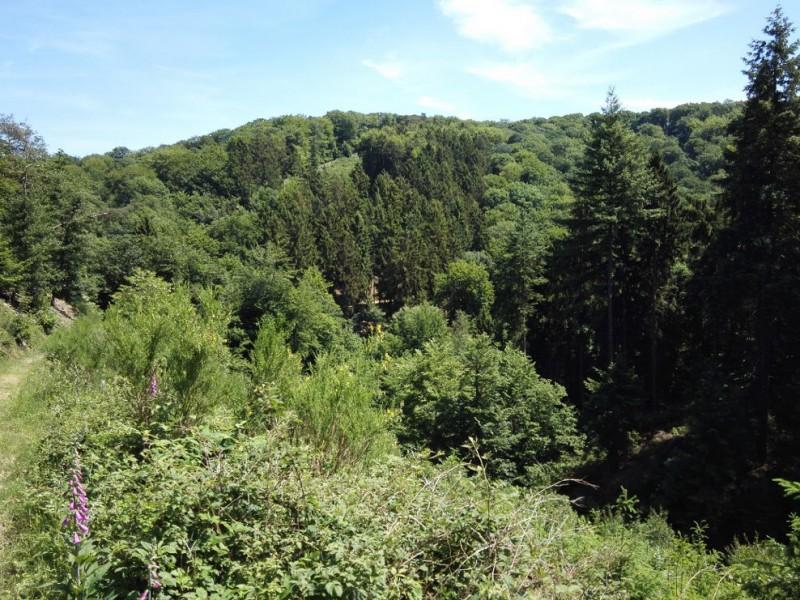 Und wieder ein schöner Ausblick auf dem Saar-Hunsrück-Steig zwischen Oppenhausen und Boppard