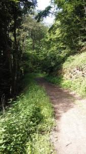 Saar-Hunsrueck-Steig-Oppenhausen-Boppard_7