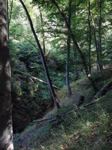 Saar-Hunsrueck-Steig-Oppenhausen-Boppard_9