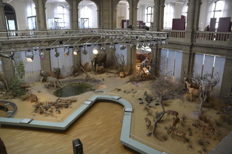 Überblick von oben im Museum Koenig Bonn