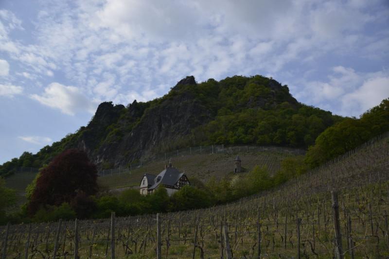 Blick über die Weinberge hinaus zum Drachenfels