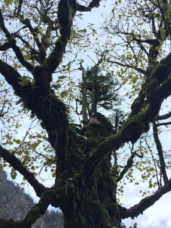 Baum, der auf einem Baum wächst...