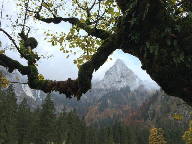Berg-im-Baum