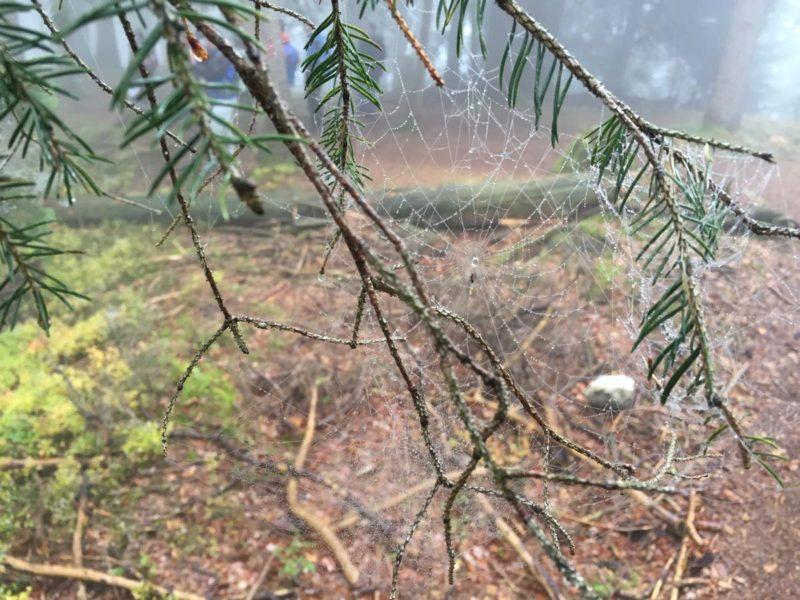 Spinnweben im Tau bei der Wandertrilogie Allgäu