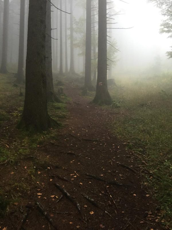 Waldweg der Wandertrilogie im Nebel