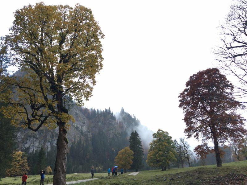 Bunte Bäume unten vor Halblech