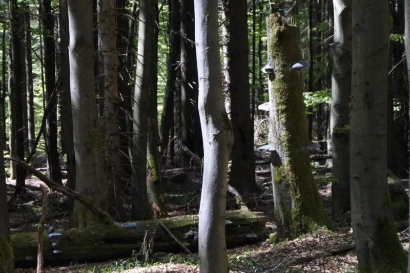 Ein Blick in eine Kernzone des Biospärenreservats Vessertal-Thüringer Wald