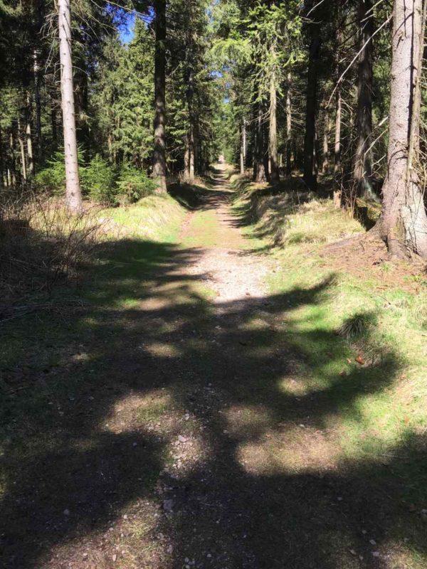 Steil geht es aufwärts im Wald - kaum zu erkennen auf dem Bild