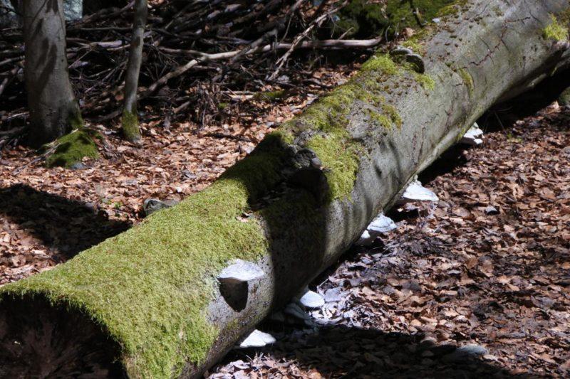 Biosphaerenreservat-Vessertal-Thueringer-Wald-Schwamm