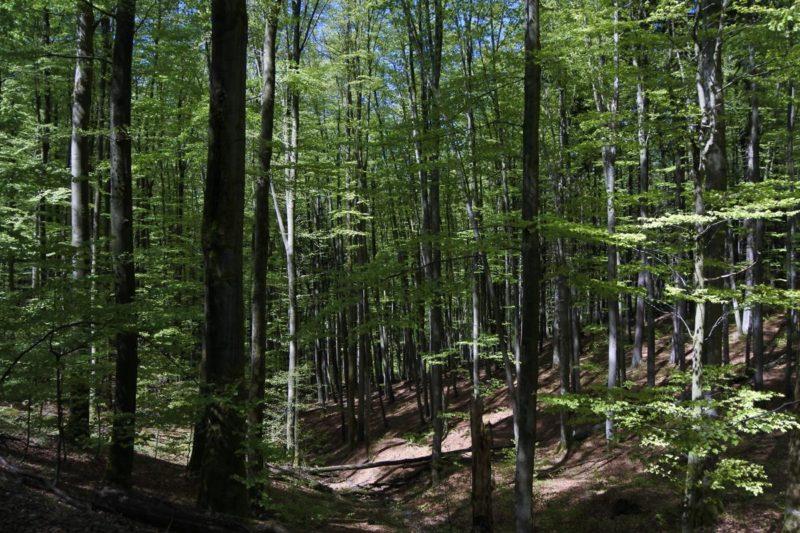 Grüner, grüner und noch mehr grün im Biosphärenreservat Vessertal-Thüringer Wald