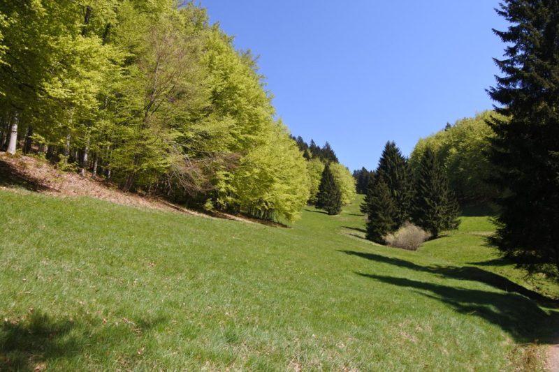Bergwiese des Oberen Völklestal von unten im Biosphärenreservats Vessertal-Thüringer Wald